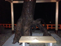 Creepy tree trunk inside the temple. OMG did it just move?