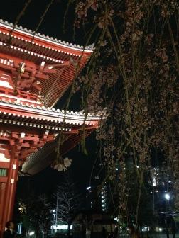 Asakusa with sakura