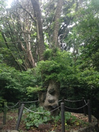 Tree with lava rocks stuck in it