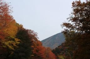 Beautiful Nikko!