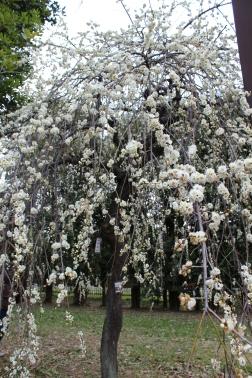 So many blossoms.