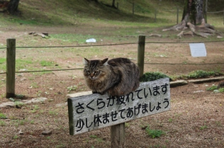 The cat that stole the show at Himeji