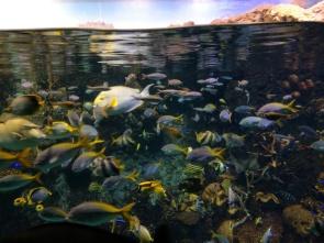 Fish at Osaka Aquarium